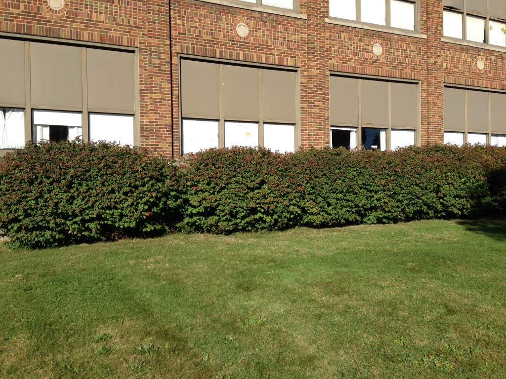 Shrubs on the east side of the building, by the Gecko room windows, need trimming to the bottom of window height so children can see outside.